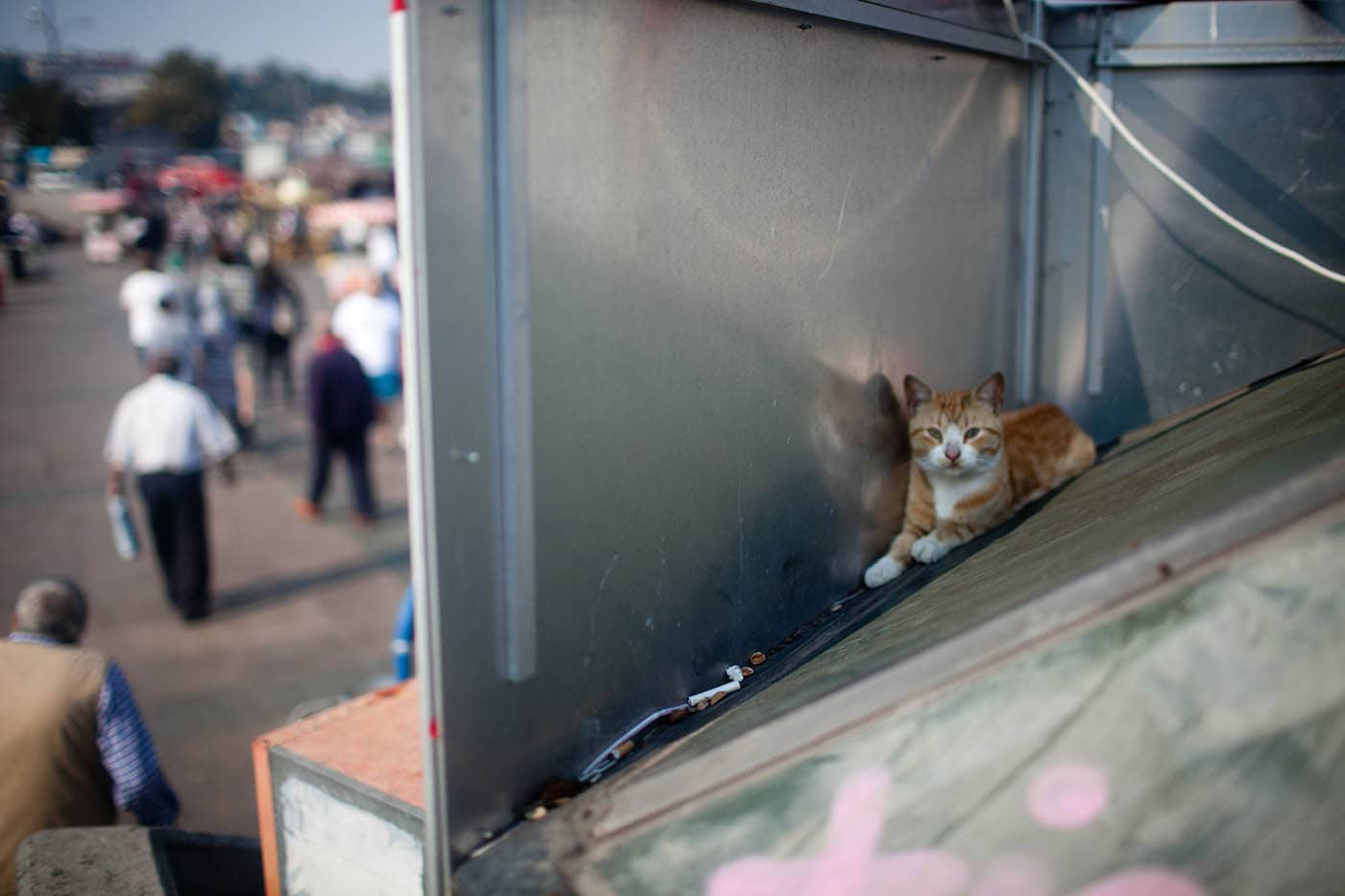 Cat on the Galata Bridge in Istanbul, Turkey.