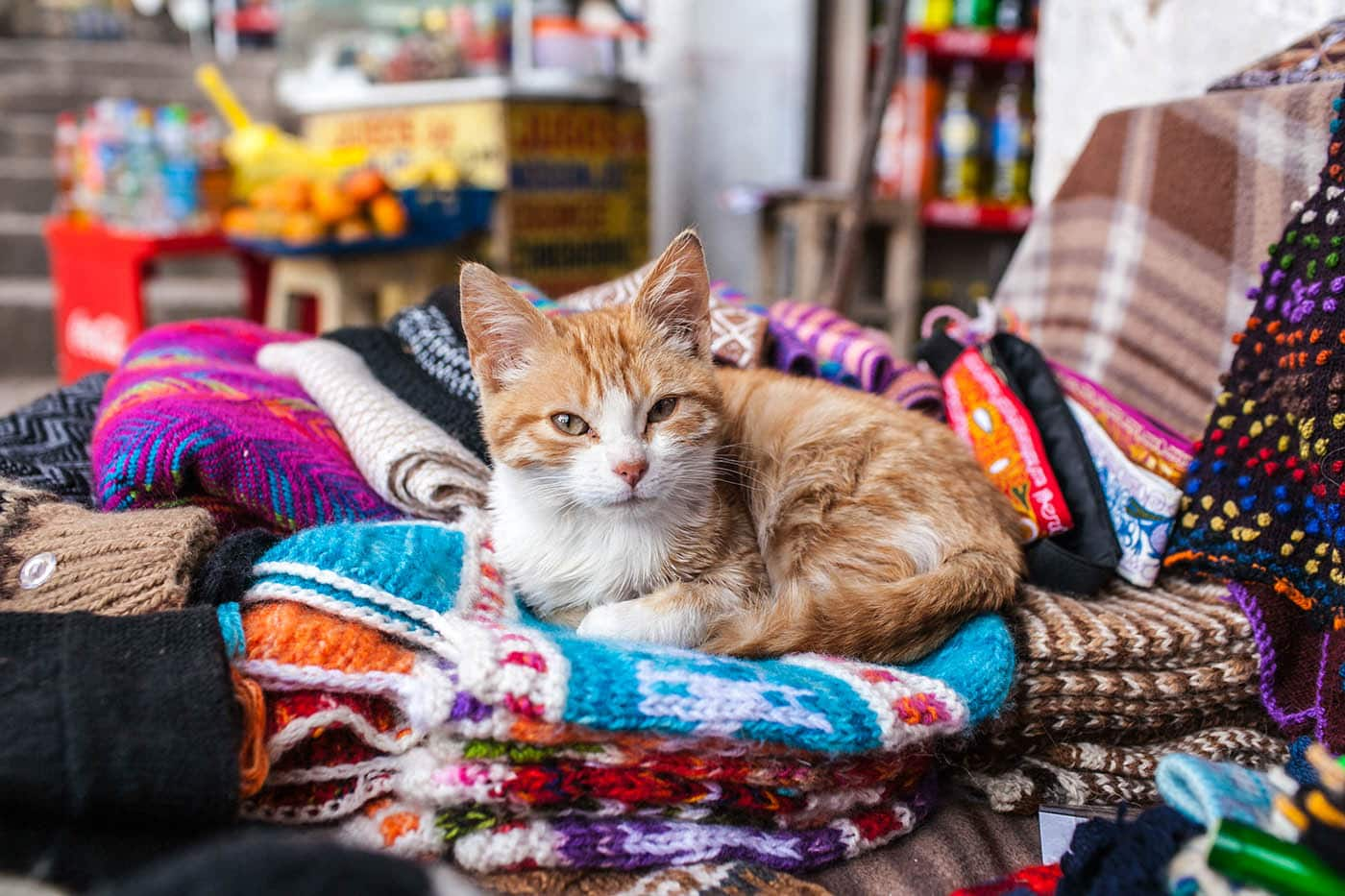 Cat in a market in Cusco, Peru.