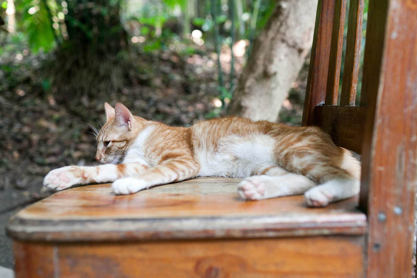 Hostel cat at D&D Brewery at Lago de Yojoa, Honduras.