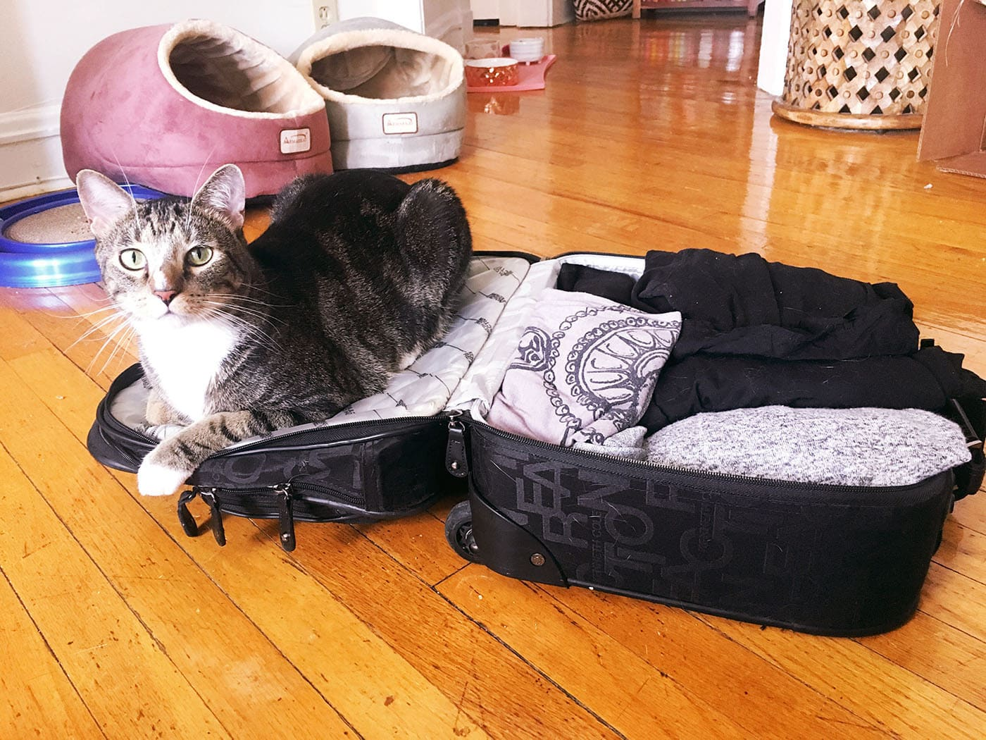 Packing for my vacation in New York. My cat wanted to come with.