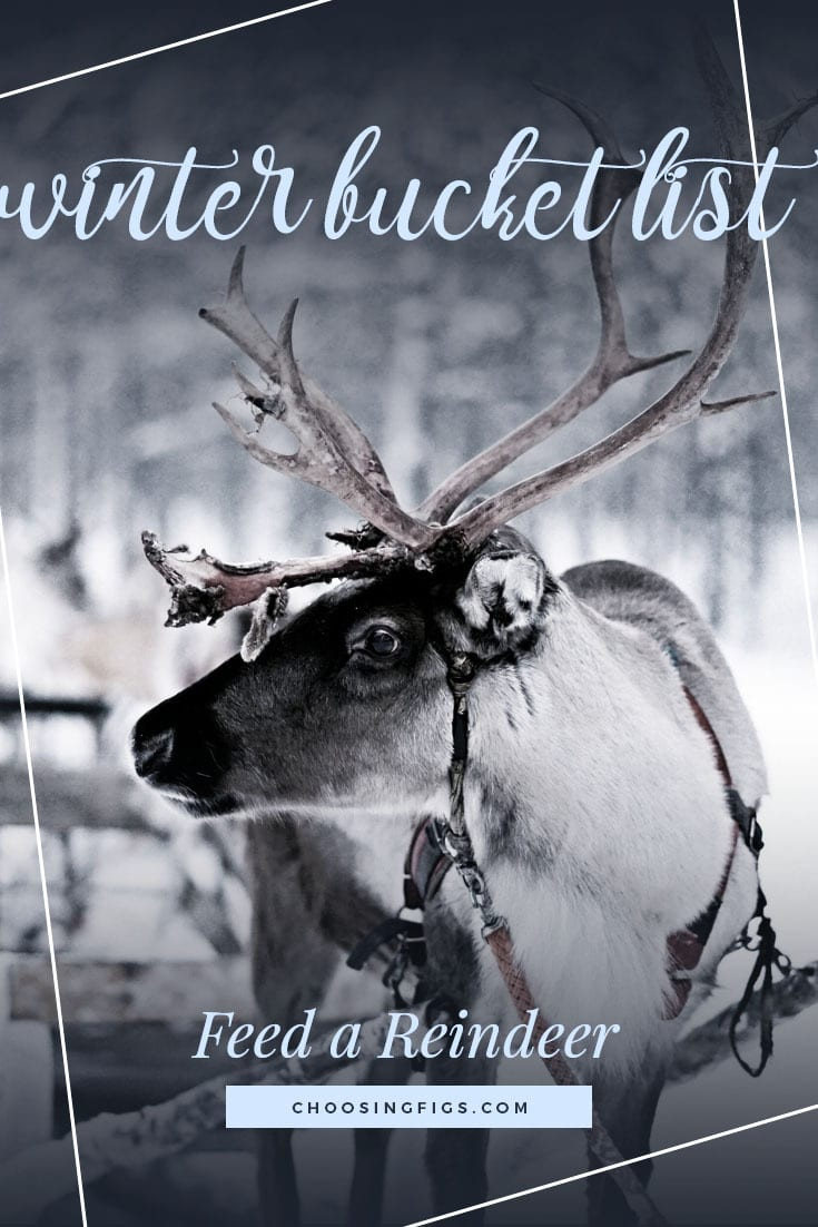 FEED A REINDEER | Winter Bucket List Ideas: 50 Things to do in Winter