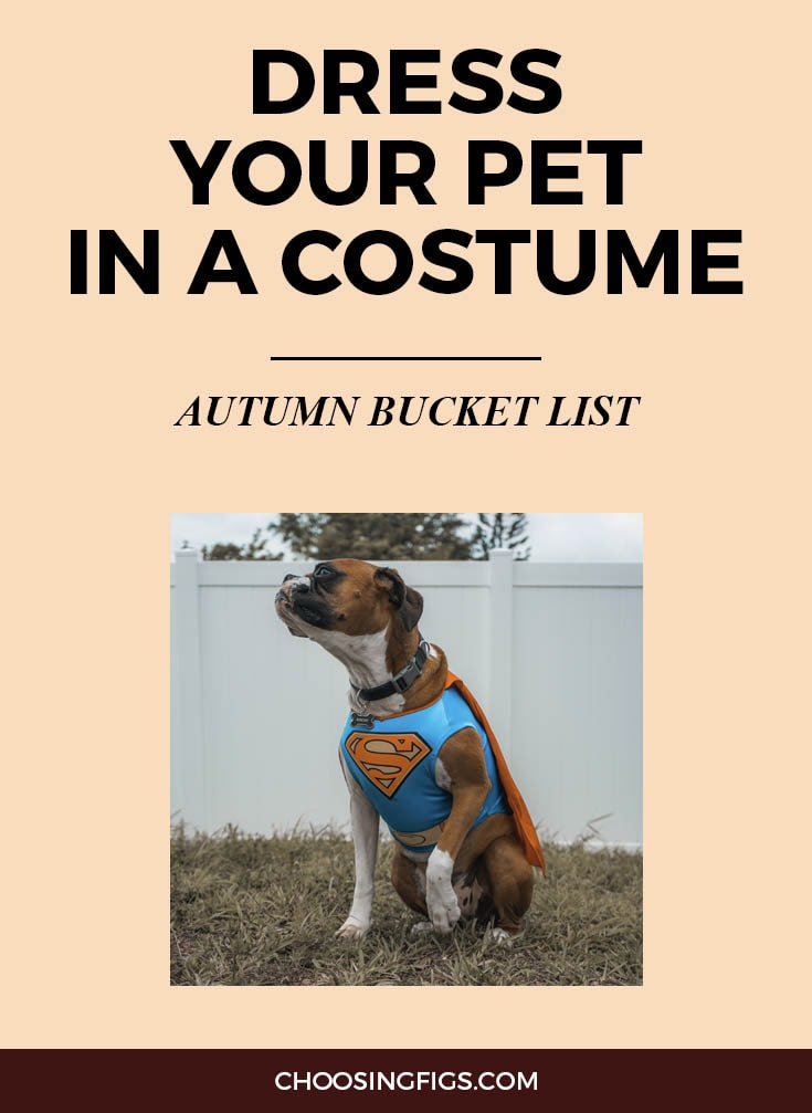 DRESS YOUR PET IN A COSTUME | Autumn Bucket List: 50 Things to do in Fall