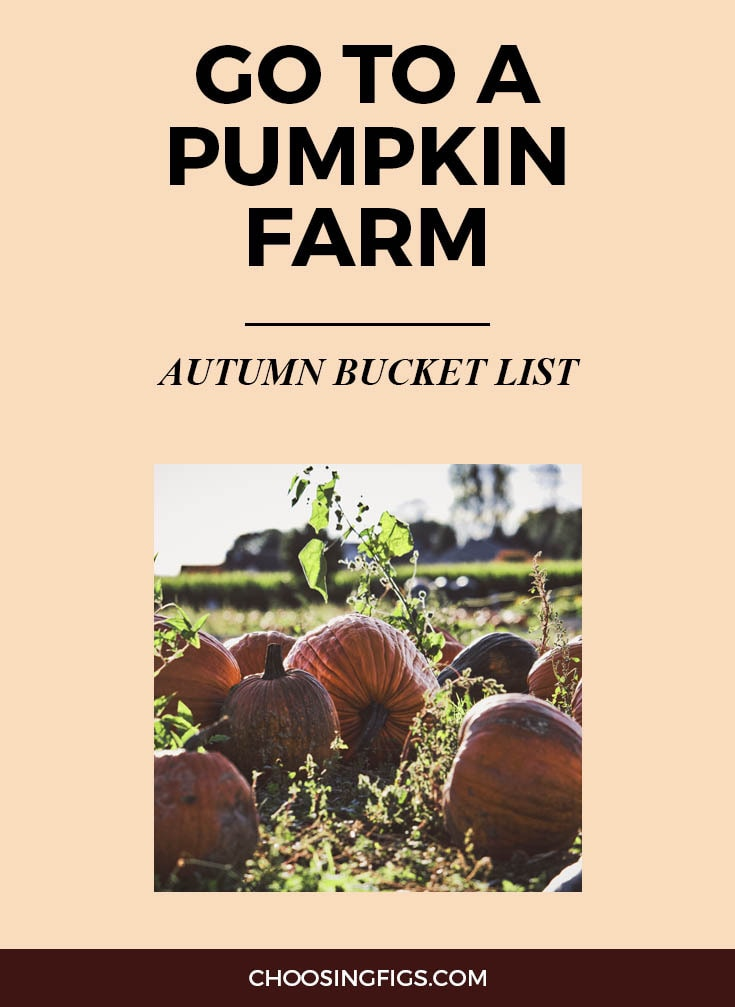 GO TO A PUMPKIN FARM | Autumn Bucket List: 50 Things to do in Fall