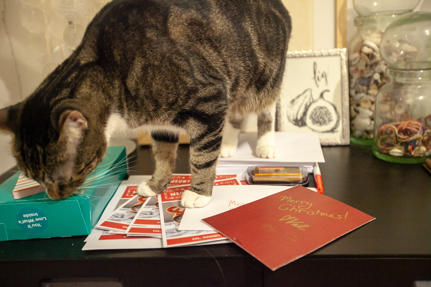 I sent Christmas cards for the first time ever. | Have a Very Meowy Christmas cat photo Christmas cards from Walgreens.