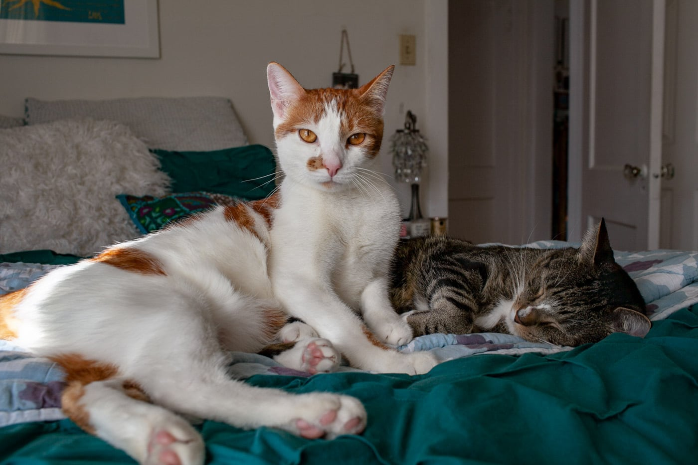 I adopted cats. | 38 things I've done in my life.