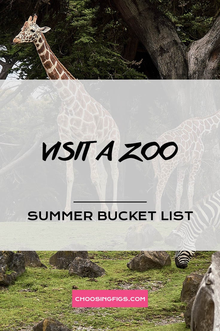 VISIT A ZOO | Summer Bucket List Ideas: 50 Things to do in Summer