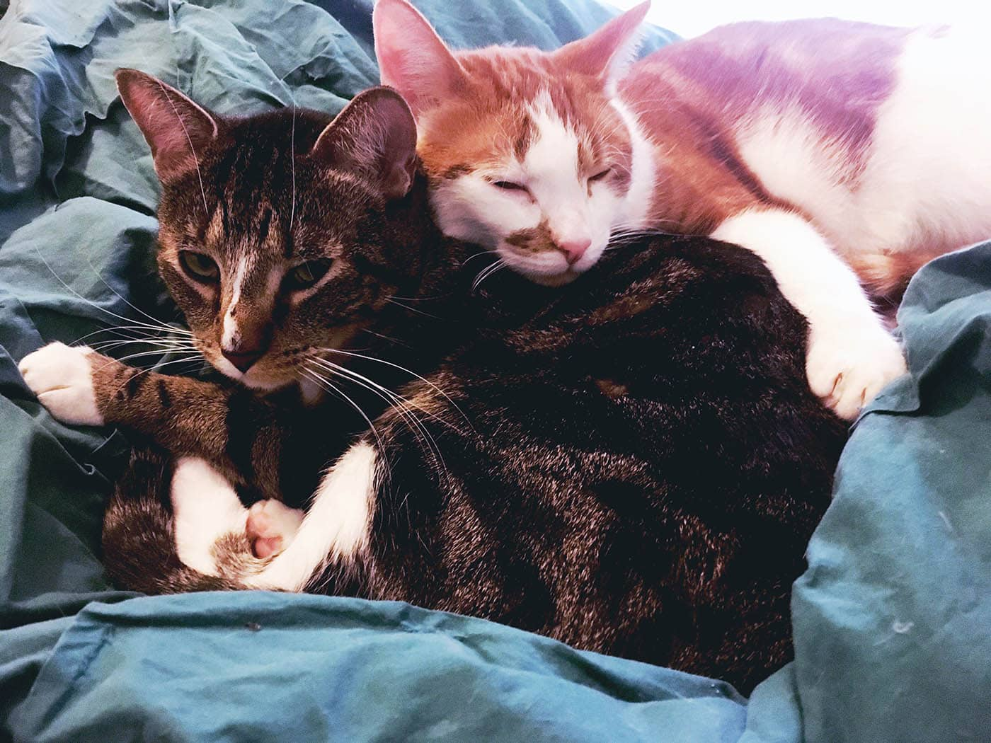 My cats snuggling in bed.
