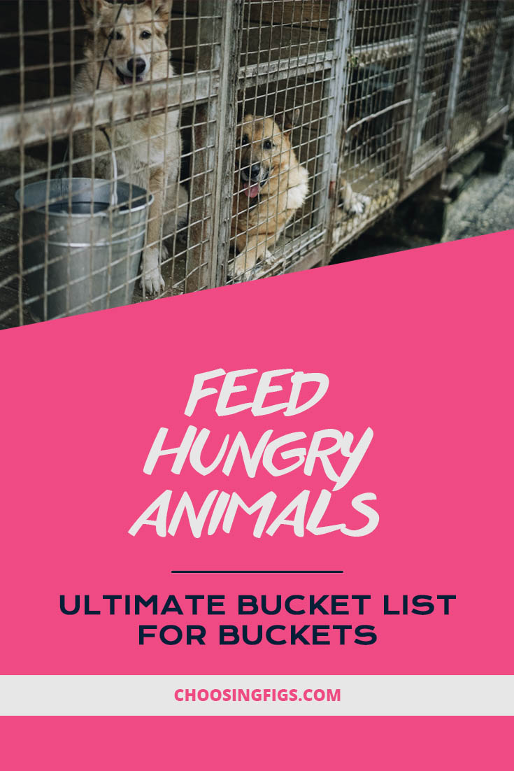 Feed hungry animals. Ultimate Bucket List Ideas for Buckets.