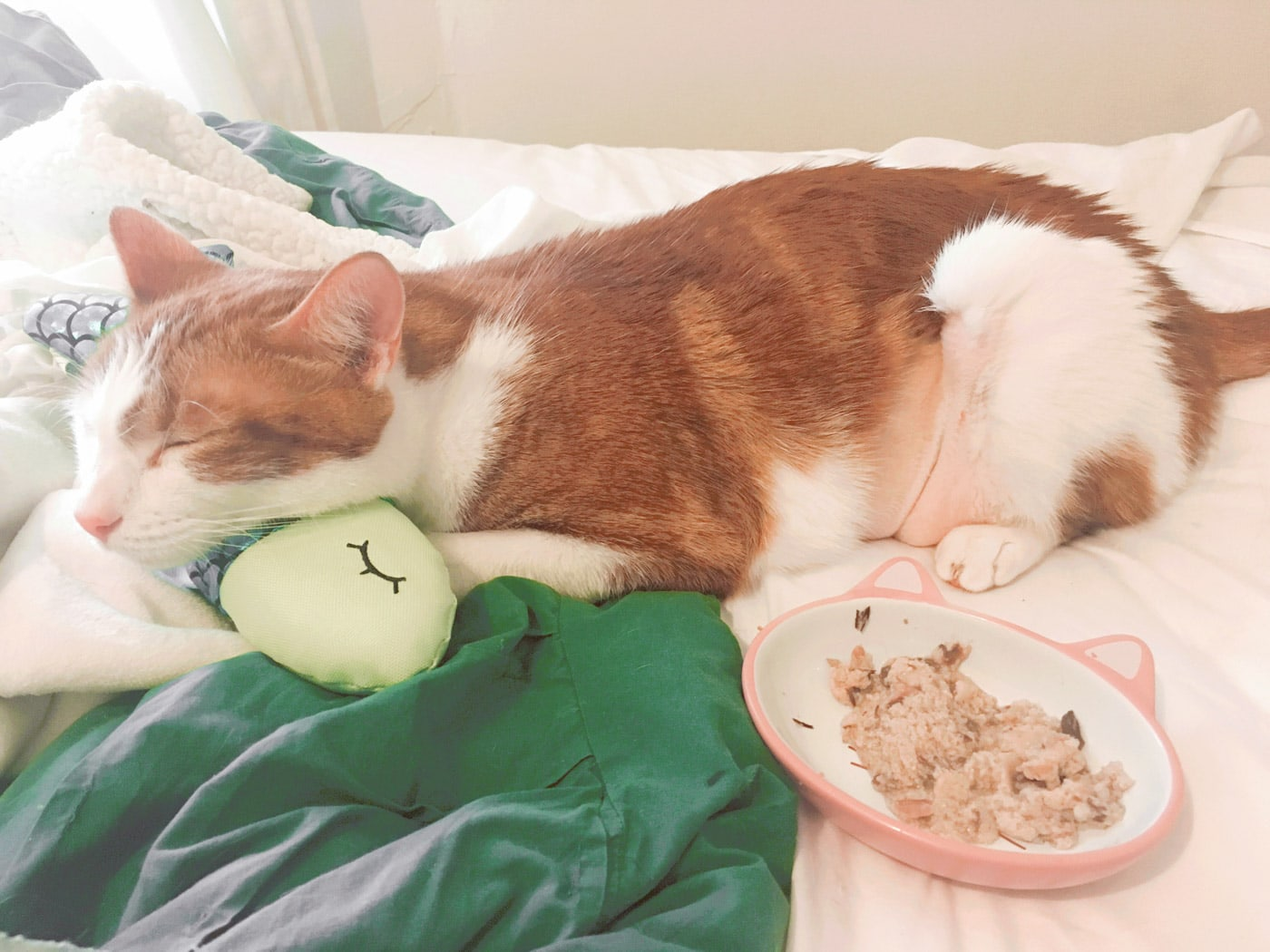 Rooney my cat gets everything he wants after surgery. Like a new crinkle fish cat toy and chicken in bed.
