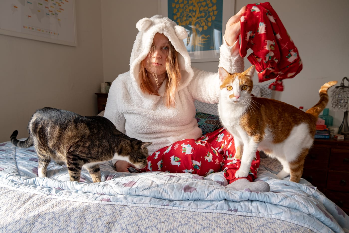 Ridiculous cat gifts for cat ladies and the cats they love.