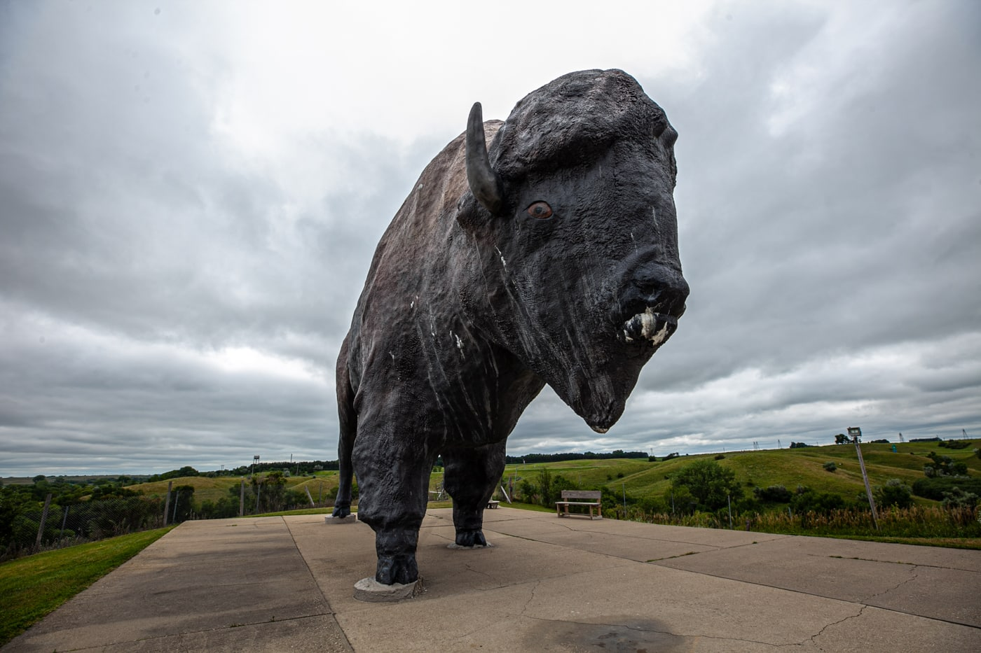 World's Largest Buffalo in Jamestown, North Dakota Roadside Attraction.