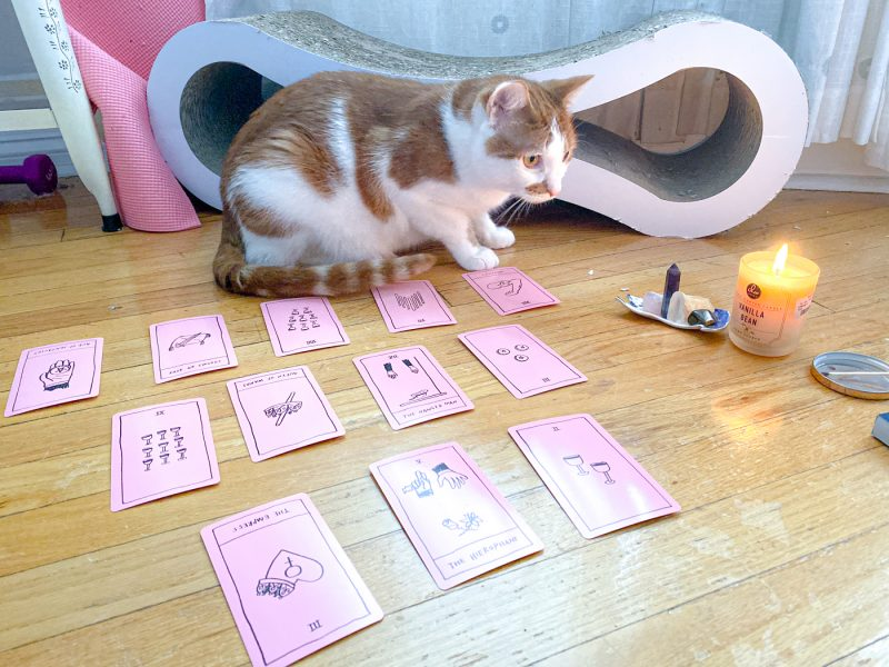 New Year spread tarot reading with my Familiar cat Rooney.