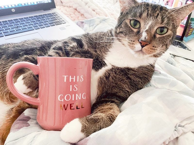 Cat holding a This is Going Well mug