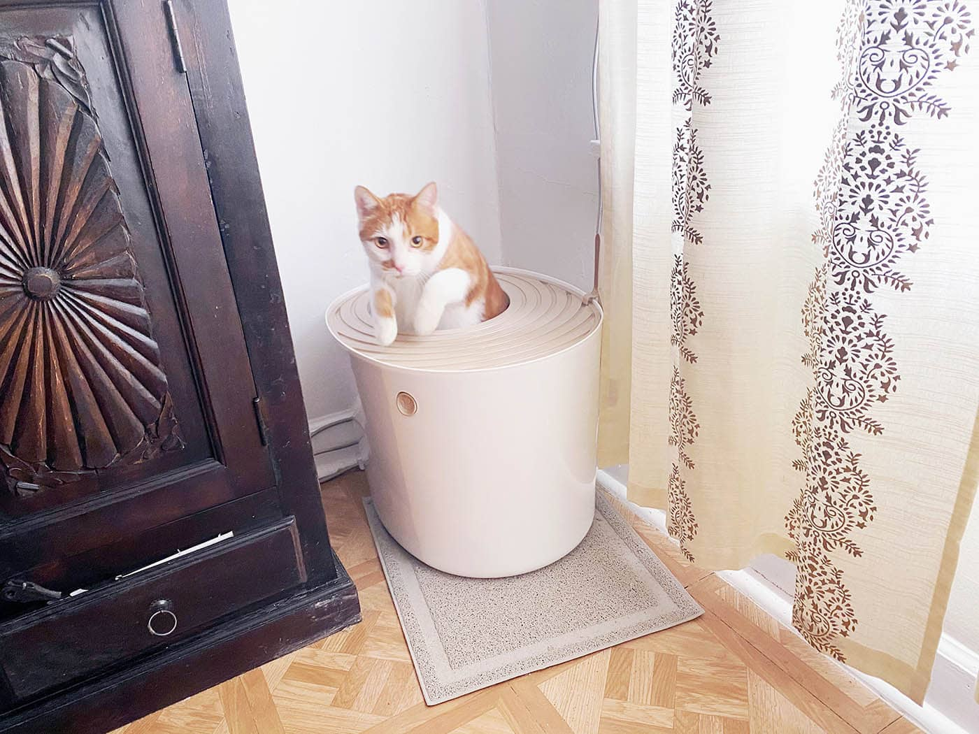 My cat in a Top Entry Cat Litter Box