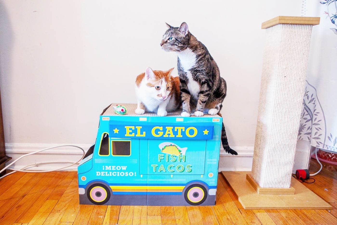 Cat Taco Truck
